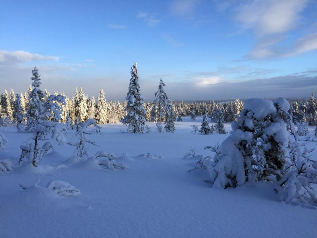 The view from the Gubbmyren Nordic ski trails in Sälen, Dalarna county, Sweden. Photo by Anna Sjöström Walton for Chalk & Moss (chalkandmoss.com).