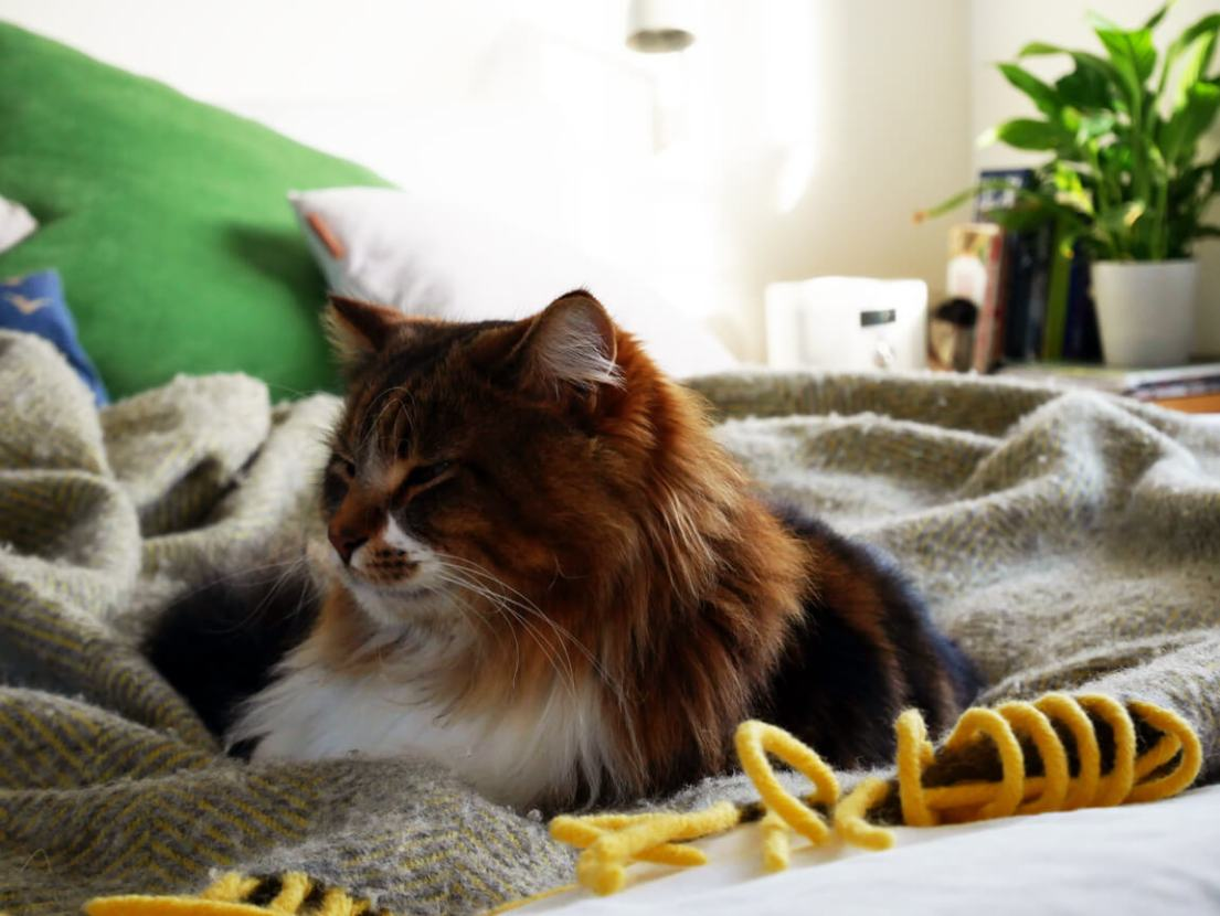Animals play an important role in home comfort and biophilic design. A purring cat even reduces your blood pressure!