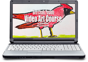 Bird Video Art Course for All Ages