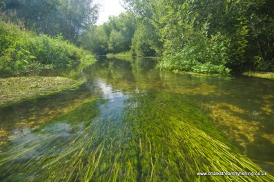 frome-grayling-pool