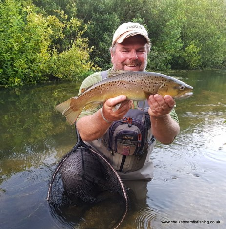 Summer Trout