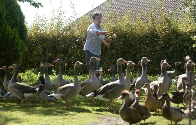 Élevage d'oies et de canards, à Soustons, le 2 septembre 2019  (AFP/Archives - Iroz Gaizka)