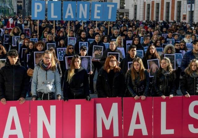 Manifestation en marge de la COP25 pour dénoncer l'impact de l'élevage industriel et la maltraitance des animaux, à Madrid le 7 décembre 2019 (AFP - CRISTINA QUICLER)