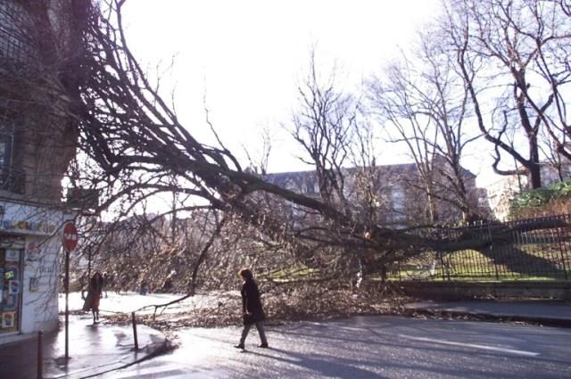 Des arbres du parc Montsouris abattus sur la chaussée, le 26 décembre 1999 à Paris après une violente tempête (AFP/Archives - ERIC FEFERBERG)