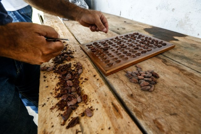 Evaluation de fèves de cacao sèches dans la ferme Sagarama à Coaraci, dans l'Etat de Bahia, nord-est du Brésil, le 12 décembre 2019 (AFP/Archives - RAFAEL MARTINS)