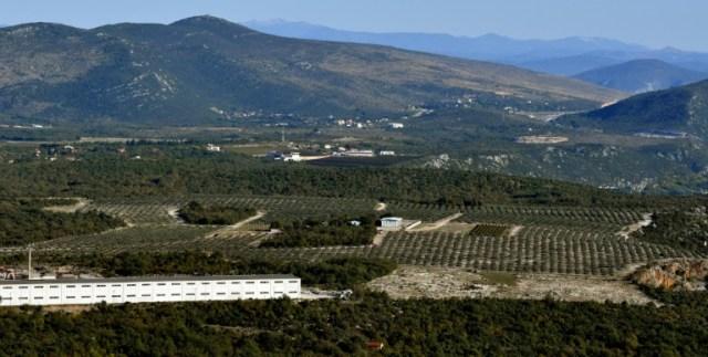 Des plantations d'oliviers près de Ljubuski, le 19 octobre 2020 en Bosnie (AFP - ELVIS BARUKCIC)