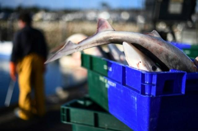 Des pêcheurs débarquent du poisson le 12 novembre 2020 sur le port de Roscoff, en Bretagne (AFP/Archives - Fred TANNEAU)