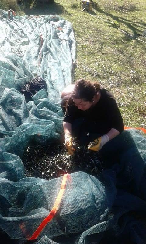 olive-harvest-enjoy-agrotourism