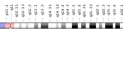 Chromosoom 13