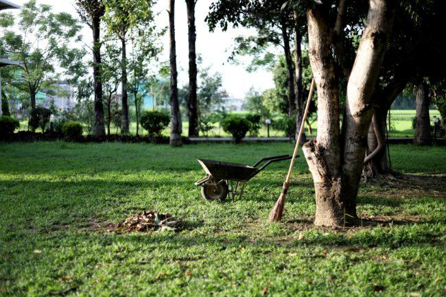 garden, trees, wheelbarrow