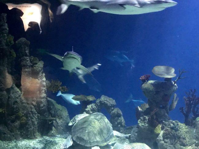 shark at the Deep Hull