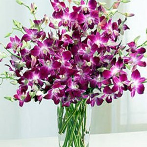 8 purple orchids bouquet CF