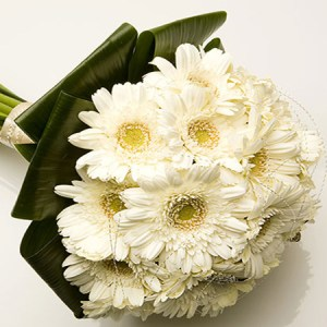 CF White Gerberas Bouquet