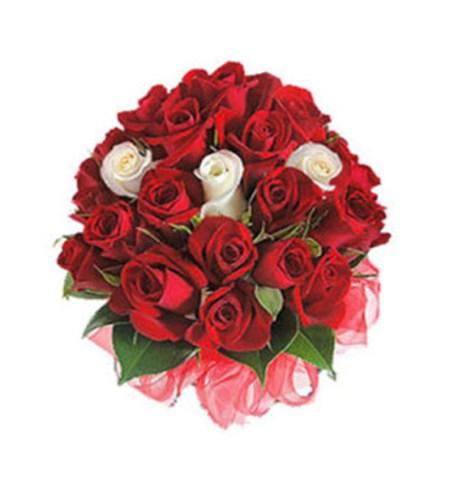 CF Roses Speaks
