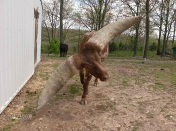 El toro Lurch