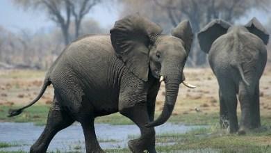 elefantes cementerio