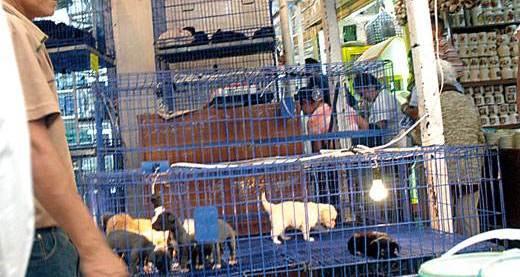 animales mercado