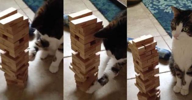 Moe el gato