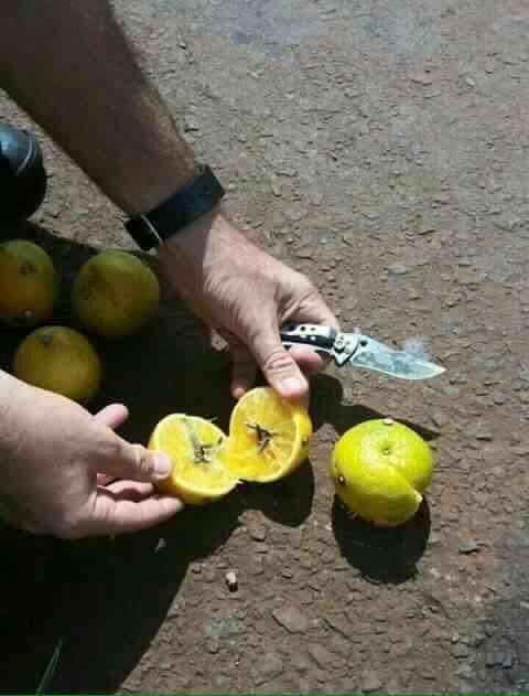 fruta-clavos-2