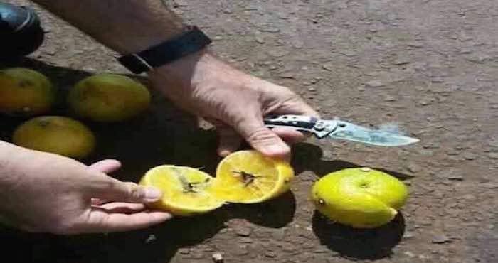 naranjas-del-mal