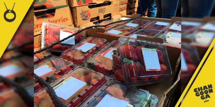 venta-fresas-Morelia-2