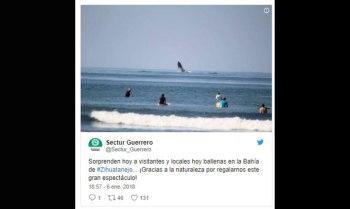 ballena-Guerrero