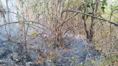 Photo of #Morelia Atienden Protección Civil Y Bomberos Morelia Incendio En Loma De Santa María
