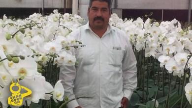 Photo of #Michoacán Confirmarían Que Muerte De Activista Homero Gómez Fue Accidental