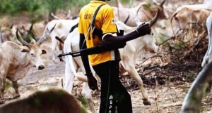 Image result for Fulani herdsmen kill one, injure three in new Adamawa attack