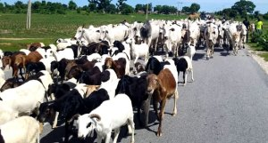The bill to create a database of livestock goes through a second reading – Television Channels