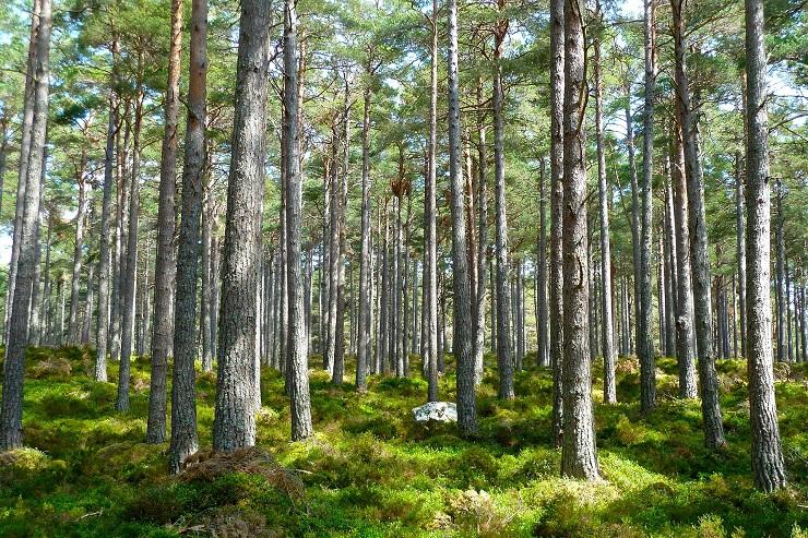 Data4 è più green e nomina il referente per la sostenibilità