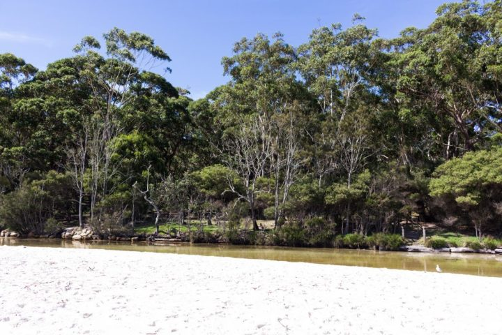 white sand in jervis bay