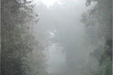Toiles de brume