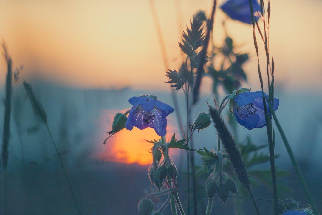 poèmes de Maurice Carême pour l'été