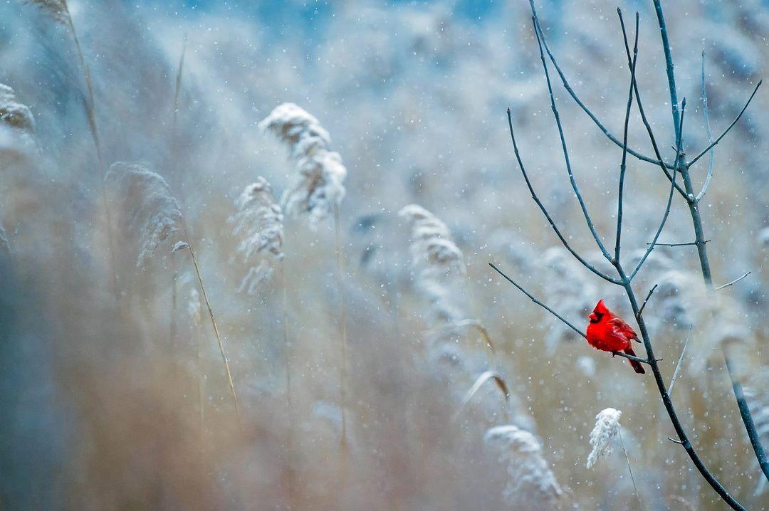Comment nourrir les oiseaux en hiver et les observer ?
