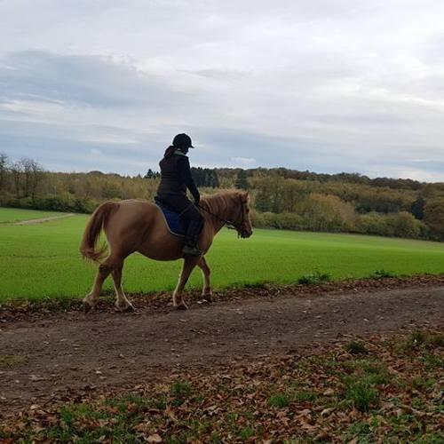 Pferd und Hund - ach ja, und Reiterin ;)
