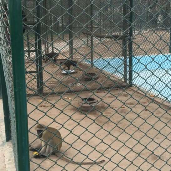 bahria town safari zoo