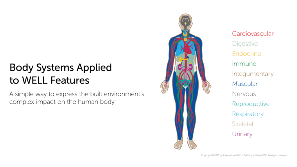 The Body Systems That the WELL Building Standard Accounts For (Image: IWBI)