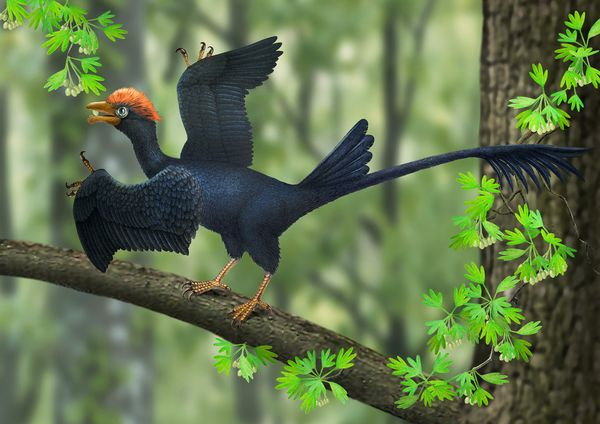 Two-Tailed Ancient Bird Discovered