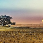 A Miraculous Survival of Tree in the Desert