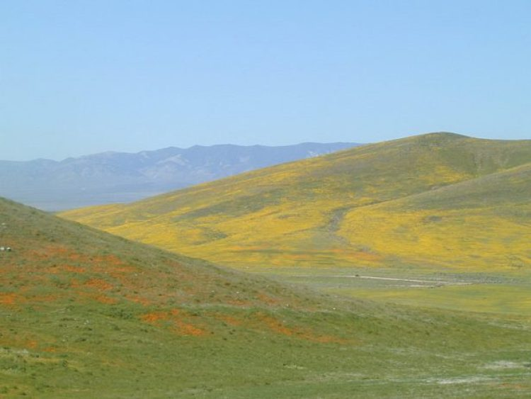 Antelope Valley Poppy Reserve in California 26_exposure_resize