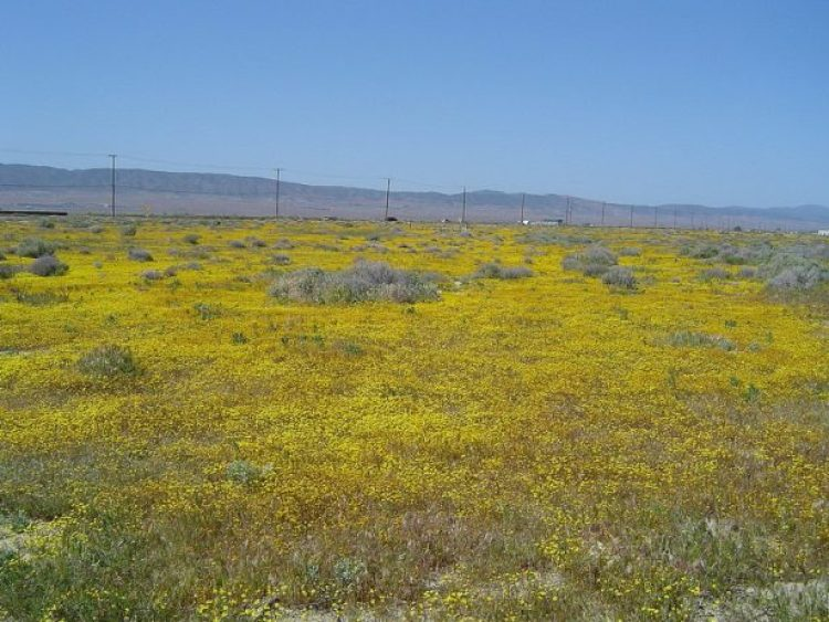 Antelope Valley Poppy Reserve in California14_exposure_resize
