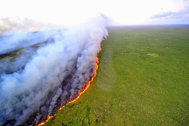 Band fire. Forest fires burned out of the reserve in Brazil