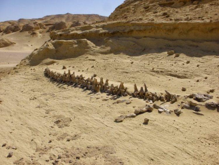 Wadi Al-Hitan (Whale Valley) Egypt14_resize