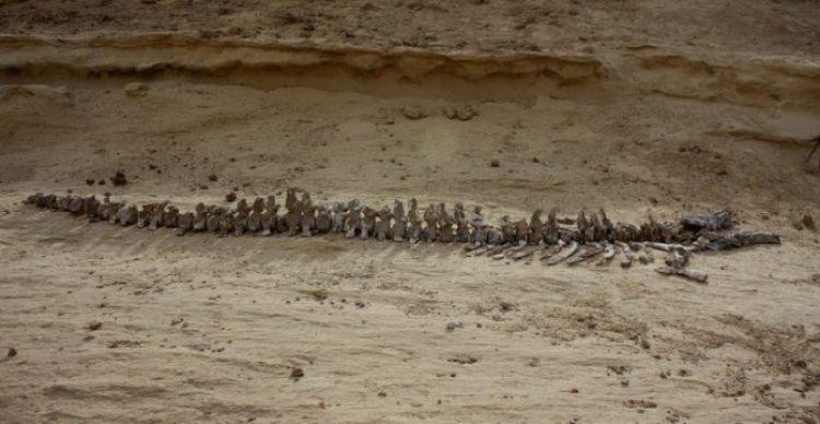 Wadi Al-Hitan (Whale Valley) Egypt_resize