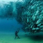 Stunning Images of Fish Tornado