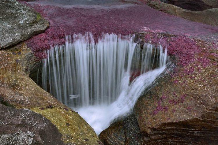 Cano Cristales a small river23