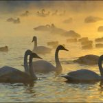 The Breath-Taking Real Life of Svetloe Lake in Serbia