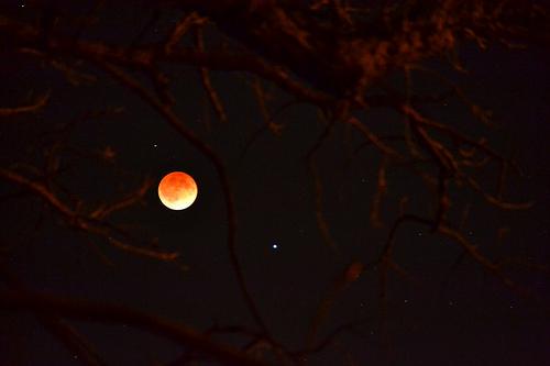 Blood Moon0