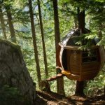 Egg Shaped Tree House Secretly placed on Canada Woods